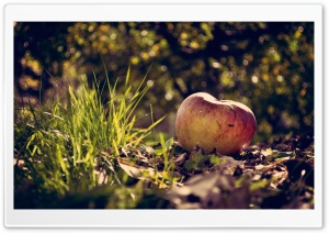 Apple On The Ground HD Wide Wallpaper for Widescreen