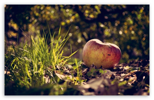 Apple On The Ground ❤ 4K UHD Wallpaper for Wide 16:10 5:3 Widescreen WHXGA WQXGA WUXGA WXGA WGA ; 4K UHD 16:9 Ultra High Definition 2160p 1440p 1080p 900p 720p ; Standard 4:3 5:4 3:2 Fullscreen UXGA XGA SVGA QSXGA SXGA DVGA HVGA HQVGA ( Apple PowerBook G4 iPhone 4 3G 3GS iPod Touch ) ; Tablet 1:1 ; iPad 1/2/Mini ; Mobile 4:3 5:3 3:2 16:9 5:4 - UXGA XGA SVGA WGA DVGA HVGA HQVGA ( Apple PowerBook G4 iPhone 4 3G 3GS iPod Touch ) 2160p 1440p 1080p 900p 720p QSXGA SXGA ; Dual 16:10 5:3 16:9 4:3 5:4 WHXGA WQXGA WUXGA WXGA WGA 2160p 1440p 1080p 900p 720p UXGA XGA SVGA QSXGA SXGA ;