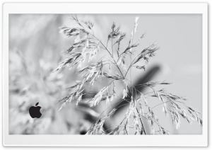 Apple White Edition HD Wide Wallpaper for Widescreen