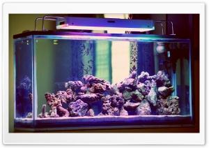 Aquarium Ultra HD Wallpaper for 4K UHD Widescreen desktop, tablet & smartphone