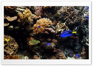 Aquarium Fish HD Wide Wallpaper for 4K UHD Widescreen desktop & smartphone