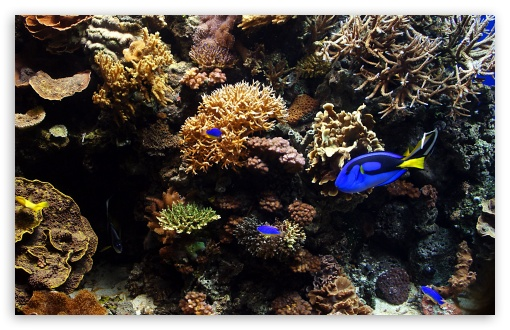 Aquarium Fish HD wallpaper for Wide 16:10 5:3 Widescreen WHXGA WQXGA WUXGA WXGA WGA ; HD 16:9 High Definition WQHD QWXGA 1080p 900p 720p QHD nHD ; Standard 4:3 5:4 3:2 Fullscreen UXGA XGA SVGA QSXGA SXGA DVGA HVGA HQVGA devices ( Apple PowerBook G4 iPhone 4 3G 3GS iPod Touch ) ; Tablet 1:1 ; iPad 1/2/Mini ; Mobile 4:3 5:3 3:2 16:9 5:4 - UXGA XGA SVGA WGA DVGA HVGA HQVGA devices ( Apple PowerBook G4 iPhone 4 3G 3GS iPod Touch ) WQHD QWXGA 1080p 900p 720p QHD nHD QSXGA SXGA ;