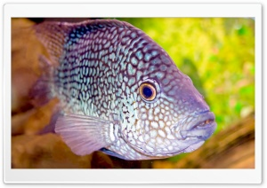 Aquarium Fish HD Wide Wallpaper for Widescreen