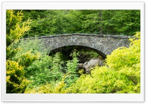 Arch Bridge, Green Trees, Nature Ultra HD Wallpaper for 4K UHD Widescreen desktop, tablet & smartphone