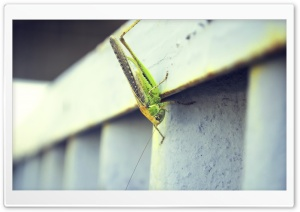 Armenia, Grasshopper HD Wide Wallpaper for Widescreen