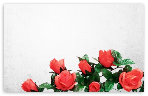 Artificial Flowers HD wallpaper for Wide 16:10 5:3 Widescreen WHXGA WQXGA WUXGA WXGA WGA ; HD 16:9 High Definition WQHD QWXGA 1080p 900p 720p QHD nHD ; Standard 4:3 5:4 3:2 Fullscreen UXGA XGA SVGA QSXGA SXGA DVGA HVGA HQVGA devices ( Apple PowerBook G4 iPhone 4 3G 3GS iPod Touch ) ; Tablet 1:1 ; iPad 1/2/Mini ; Mobile 4:3 5:3 3:2 16:9 5:4 - UXGA XGA SVGA WGA DVGA HVGA HQVGA devices ( Apple PowerBook G4 iPhone 4 3G 3GS iPod Touch ) WQHD QWXGA 1080p 900p 720p QHD nHD QSXGA SXGA ;