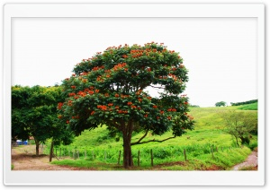 Arvore Santa Rita Brasil HD Wide Wallpaper for Widescreen