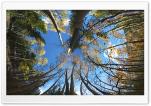 Aspen Forest FishEye HD Wide Wallpaper for Widescreen