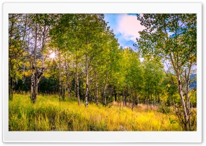 Aspen Grove Backlighting HD Wide Wallpaper for Widescreen