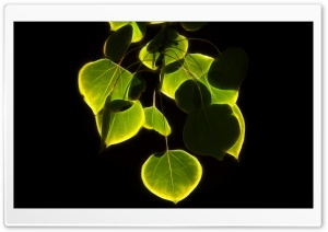 Aspen Leaves HD Wide Wallpaper for Widescreen