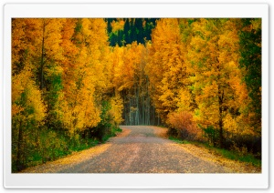 Aspen Trees in Fall HD Wide Wallpaper for Widescreen