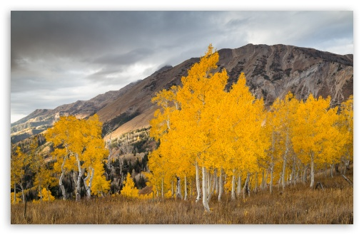 Aspen Trees In The Fall ❤ 4K UHD Wallpaper for Wide 16:10 5:3 Widescreen WHXGA WQXGA WUXGA WXGA WGA ; UltraWide 21:9 ; 4K UHD 16:9 Ultra High Definition 2160p 1440p 1080p 900p 720p ; Standard 4:3 5:4 3:2 Fullscreen UXGA XGA SVGA QSXGA SXGA DVGA HVGA HQVGA ( Apple PowerBook G4 iPhone 4 3G 3GS iPod Touch ) ; Smartphone 16:9 3:2 5:3 2160p 1440p 1080p 900p 720p DVGA HVGA HQVGA ( Apple PowerBook G4 iPhone 4 3G 3GS iPod Touch ) WGA ; Tablet 1:1 ; iPad 1/2/Mini ; Mobile 4:3 5:3 3:2 16:9 5:4 - UXGA XGA SVGA WGA DVGA HVGA HQVGA ( Apple PowerBook G4 iPhone 4 3G 3GS iPod Touch ) 2160p 1440p 1080p 900p 720p QSXGA SXGA ;