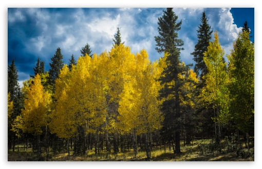 Aspens Trees Colorado ❤ 4K UHD Wallpaper for Wide 16:10 5:3 Widescreen WHXGA WQXGA WUXGA WXGA WGA ; UltraWide 21:9 ; 4K UHD 16:9 Ultra High Definition 2160p 1440p 1080p 900p 720p ; Standard 4:3 5:4 3:2 Fullscreen UXGA XGA SVGA QSXGA SXGA DVGA HVGA HQVGA ( Apple PowerBook G4 iPhone 4 3G 3GS iPod Touch ) ; Smartphone 16:9 3:2 5:3 2160p 1440p 1080p 900p 720p DVGA HVGA HQVGA ( Apple PowerBook G4 iPhone 4 3G 3GS iPod Touch ) WGA ; Tablet 1:1 ; iPad 1/2/Mini ; Mobile 4:3 5:3 3:2 16:9 5:4 - UXGA XGA SVGA WGA DVGA HVGA HQVGA ( Apple PowerBook G4 iPhone 4 3G 3GS iPod Touch ) 2160p 1440p 1080p 900p 720p QSXGA SXGA ; Dual 16:10 5:3 16:9 4:3 5:4 3:2 WHXGA WQXGA WUXGA WXGA WGA 2160p 1440p 1080p 900p 720p UXGA XGA SVGA QSXGA SXGA DVGA HVGA HQVGA ( Apple PowerBook G4 iPhone 4 3G 3GS iPod Touch ) ;