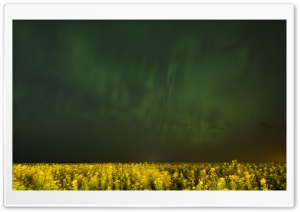 Aurora Over Canola Fields In Alberta HD Wide Wallpaper for Widescreen
