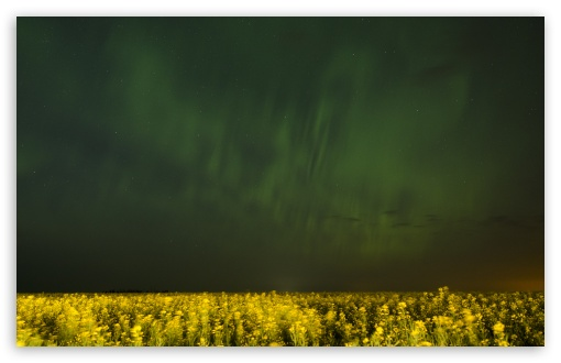 Aurora Over Canola Fields In Alberta ❤ 4K UHD Wallpaper for Wide 16:10 5:3 Widescreen WHXGA WQXGA WUXGA WXGA WGA ; 4K UHD 16:9 Ultra High Definition 2160p 1440p 1080p 900p 720p ; UHD 16:9 2160p 1440p 1080p 900p 720p ; Standard 4:3 5:4 3:2 Fullscreen UXGA XGA SVGA QSXGA SXGA DVGA HVGA HQVGA ( Apple PowerBook G4 iPhone 4 3G 3GS iPod Touch ) ; Tablet 1:1 ; iPad 1/2/Mini ; Mobile 4:3 5:3 3:2 16:9 5:4 - UXGA XGA SVGA WGA DVGA HVGA HQVGA ( Apple PowerBook G4 iPhone 4 3G 3GS iPod Touch ) 2160p 1440p 1080p 900p 720p QSXGA SXGA ; Dual 16:10 5:3 16:9 4:3 5:4 WHXGA WQXGA WUXGA WXGA WGA 2160p 1440p 1080p 900p 720p UXGA XGA SVGA QSXGA SXGA ;