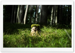 Austrian Forest HD Wide Wallpaper for Widescreen