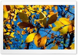 Autumn HD Wide Wallpaper for Widescreen