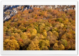Autumn Ultra HD Wallpaper for 4K UHD Widescreen desktop, tablet & smartphone