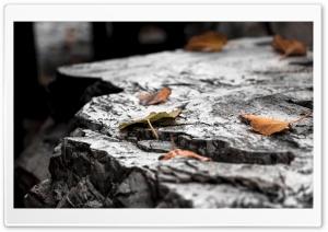 Autumn Ultra HD Wallpaper for 4K UHD Widescreen desktop, tablet & smartphone