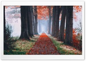 Autumn Aesthetic Ultra HD Wallpaper for 4K UHD Widescreen desktop, tablet & smartphone