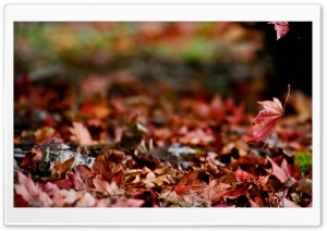 Autumn Again HD Wide Wallpaper for Widescreen