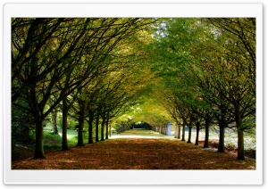 Autumn, Anglesey Abbey,...