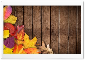 Autumn Background HD Wide Wallpaper for Widescreen