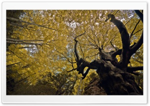 Autumn Beech HD Wide Wallpaper for Widescreen