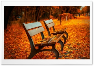 Autumn Bench HD Wide Wallpaper for Widescreen