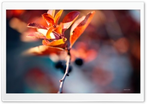 Autumn Blur HD Wide Wallpaper for Widescreen