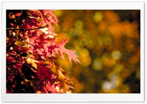 Autumn Bokeh HD Wide Wallpaper for Widescreen