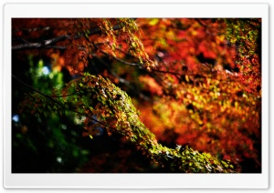 Autumn Branches HD Wide Wallpaper for Widescreen