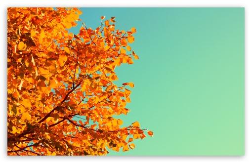 Download Autumn Colors HD Wallpaper