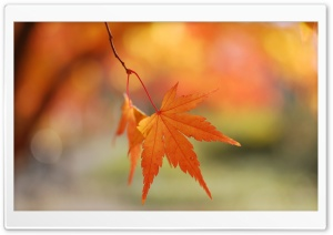 Autumn Colors HD Wide Wallpaper for Widescreen