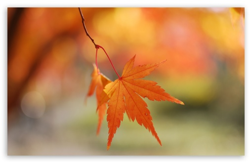 Autumn Colors HD wallpaper for Standard 4:3 5:4 Fullscreen UXGA XGA SVGA QSXGA SXGA ; Wide 16:10 5:3 Widescreen WHXGA WQXGA WUXGA WXGA WGA ; HD 16:9 High Definition WQHD QWXGA 1080p 900p 720p QHD nHD ; Other 3:2 DVGA HVGA HQVGA devices ( Apple PowerBook G4 iPhone 4 3G 3GS iPod Touch ) ; Mobile VGA WVGA iPhone iPad PSP Phone - VGA QVGA Smartphone ( PocketPC GPS iPod Zune BlackBerry HTC Samsung LG Nokia Eten Asus ) WVGA WQVGA Smartphone ( HTC Samsung Sony Ericsson LG Vertu MIO ) HVGA Smartphone ( Apple iPhone iPod BlackBerry HTC Samsung Nokia ) Sony PSP Zune HD Zen ; Tablet 2 Android 3 DVGA HVGA HQVGA devices ( Apple PowerBook G4 iPhone 4 3G 3GS iPod Touch ) ;