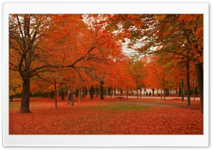 Autumn Colors 7 HD Wide Wallpaper for Widescreen