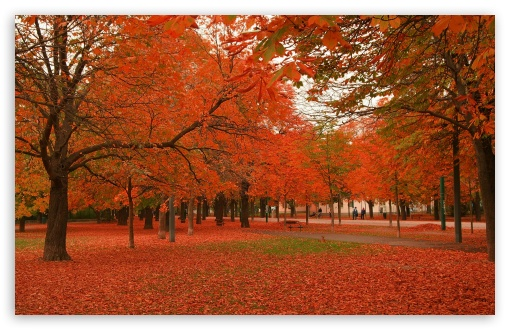 Autumn Colors 7 HD wallpaper for Wide 16:10 5:3 Widescreen WHXGA WQXGA WUXGA WXGA WGA ; HD 16:9 High Definition WQHD QWXGA 1080p 900p 720p QHD nHD ; Standard 4:3 5:4 3:2 Fullscreen UXGA XGA SVGA QSXGA SXGA DVGA HVGA HQVGA devices ( Apple PowerBook G4 iPhone 4 3G 3GS iPod Touch ) ; Tablet 1:1 ; iPad 1/2/Mini ; Mobile 4:3 5:3 3:2 16:9 5:4 - UXGA XGA SVGA WGA DVGA HVGA HQVGA devices ( Apple PowerBook G4 iPhone 4 3G 3GS iPod Touch ) WQHD QWXGA 1080p 900p 720p QHD nHD QSXGA SXGA ;