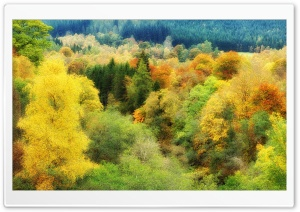 Autumn Colors Background HD Wide Wallpaper for Widescreen
