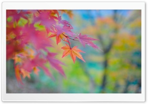 Autumn Colors In Japan HD Wide Wallpaper for Widescreen