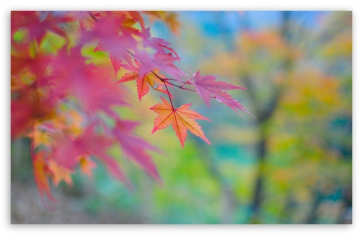 Autumn Colors In Japan HD wallpaper for Standard 4:3 5:4 Fullscreen UXGA XGA SVGA QSXGA SXGA ; Wide 16:10 5:3 Widescreen WHXGA WQXGA WUXGA WXGA WGA ; HD 16:9 High Definition WQHD QWXGA 1080p 900p 720p QHD nHD ; Other 3:2 DVGA HVGA HQVGA devices ( Apple PowerBook G4 iPhone 4 3G 3GS iPod Touch ) ; Mobile VGA WVGA iPhone iPad PSP Phone - VGA QVGA Smartphone ( PocketPC GPS iPod Zune BlackBerry HTC Samsung LG Nokia Eten Asus ) WVGA WQVGA Smartphone ( HTC Samsung Sony Ericsson LG Vertu MIO ) HVGA Smartphone ( Apple iPhone iPod BlackBerry HTC Samsung Nokia ) Sony PSP Zune HD Zen ; Tablet 2 Android 3 DVGA HVGA HQVGA devices ( Apple PowerBook G4 iPhone 4 3G 3GS iPod Touch ) ; Dual 4:3 5:4 16:10 5:3 16:9 UXGA XGA SVGA QSXGA SXGA WHXGA WQXGA WUXGA WXGA WGA WQHD QWXGA 1080p 900p 720p QHD nHD ;