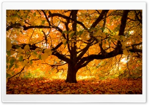 Autumn Colours under the Tree HD Wide Wallpaper for Widescreen