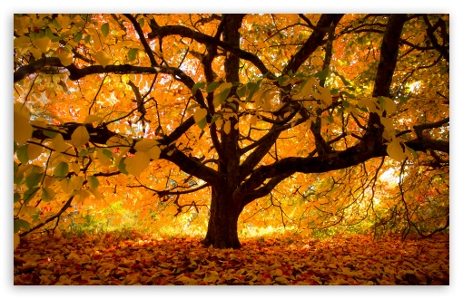 Autumn Colours under the Tree ❤ 4K UHD Wallpaper for Wide 16:10 5:3 Widescreen WHXGA WQXGA WUXGA WXGA WGA ; 4K UHD 16:9 Ultra High Definition 2160p 1440p 1080p 900p 720p ; UHD 16:9 2160p 1440p 1080p 900p 720p ; Standard 4:3 5:4 3:2 Fullscreen UXGA XGA SVGA QSXGA SXGA DVGA HVGA HQVGA ( Apple PowerBook G4 iPhone 4 3G 3GS iPod Touch ) ; Smartphone 5:3 WGA ; Tablet 1:1 ; iPad 1/2/Mini ; Mobile 4:3 5:3 3:2 16:9 5:4 - UXGA XGA SVGA WGA DVGA HVGA HQVGA ( Apple PowerBook G4 iPhone 4 3G 3GS iPod Touch ) 2160p 1440p 1080p 900p 720p QSXGA SXGA ;