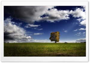 Autumn Comes HD Wide Wallpaper for Widescreen