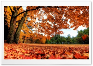Autumn Country HD Wide Wallpaper for 4K UHD Widescreen desktop & smartphone