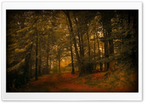 Autumn Day In The Forest HD Wide Wallpaper for Widescreen
