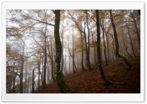 Autumn, Deciduous Forest, Trees, Fog HD Wide Wallpaper for 4K UHD Widescreen desktop & smartphone