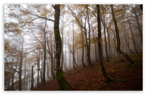 Download Autumn, Deciduous Forest, Trees, Fog HD Wallpaper