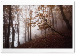 Autumn, Deciduous Forest Trees, Foggy HD Wide Wallpaper for 4K UHD Widescreen desktop & smartphone