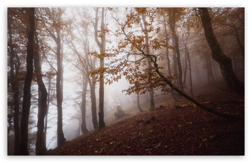 Autumn, Deciduous Forest Trees, Foggy UltraHD Wallpaper for Wide 16:10 5:3 Widescreen WHXGA WQXGA WUXGA WXGA WGA ; UltraWide 21:9 ; 8K UHD TV 16:9 Ultra High Definition 2160p 1440p 1080p 900p 720p ; Standard 4:3 5:4 3:2 Fullscreen UXGA XGA SVGA QSXGA SXGA DVGA HVGA HQVGA ( Apple PowerBook G4 iPhone 4 3G 3GS iPod Touch ) ; Smartphone 16:9 3:2 5:3 2160p 1440p 1080p 900p 720p DVGA HVGA HQVGA ( Apple PowerBook G4 iPhone 4 3G 3GS iPod Touch ) WGA ; Tablet 1:1 ; iPad 1/2/Mini ; Mobile 4:3 5:3 3:2 16:9 5:4 - UXGA XGA SVGA WGA DVGA HVGA HQVGA ( Apple PowerBook G4 iPhone 4 3G 3GS iPod Touch ) 2160p 1440p 1080p 900p 720p QSXGA SXGA ;