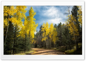 Autumn Drive in Colorado HD Wide Wallpaper for 4K UHD Widescreen desktop & smartphone